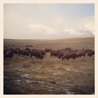 Free Technology for Teachers: Bison, Bears, Birds, and Puppies - Live Webcams
