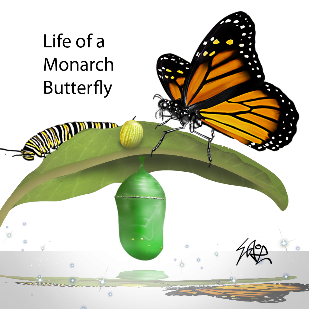 Life of a Monarch Butterfly
