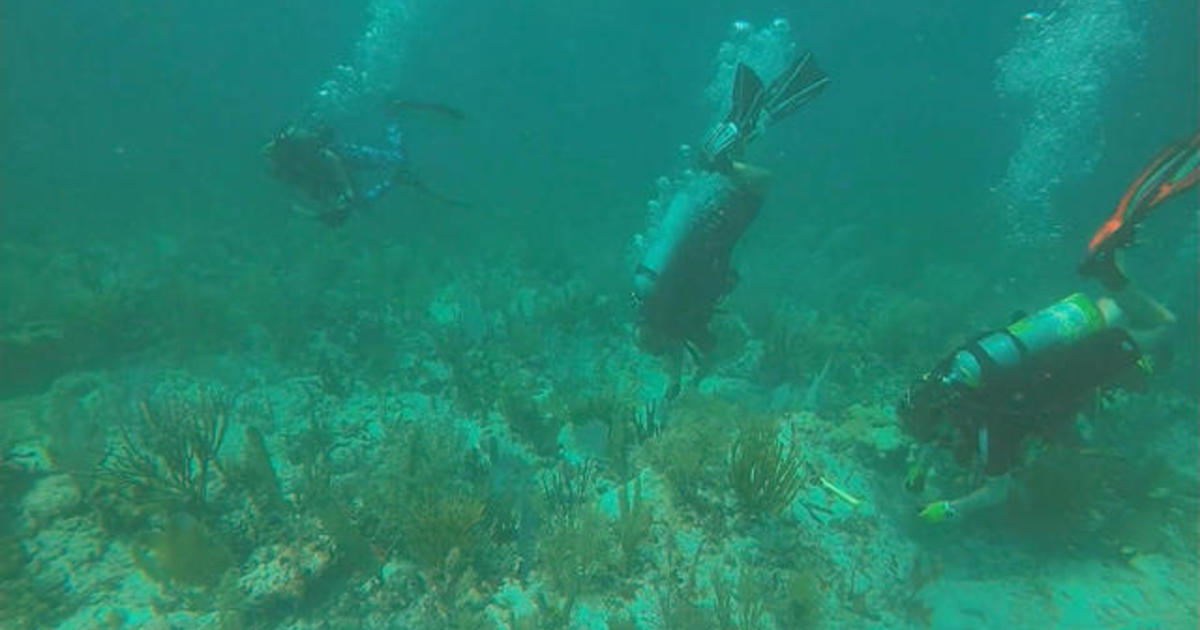 Citizen scientists work to save Florida's coral reef