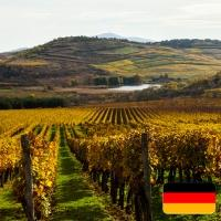 Taste of Tradition: Terroirs in Tokaj (German)