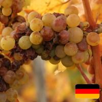 Furmint for Freaks (German)