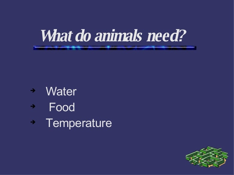 What do animals need?