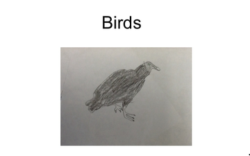 Vulture | Educreations