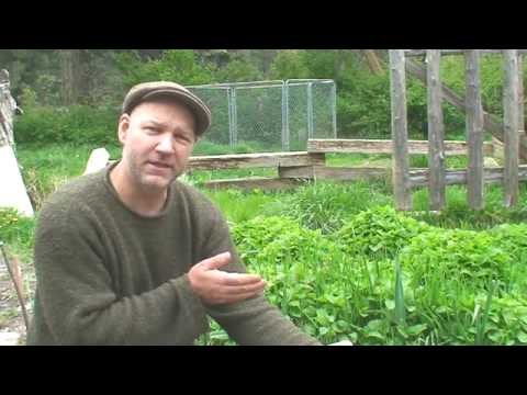 'How To Plant a Salad Garden' on ViewPure