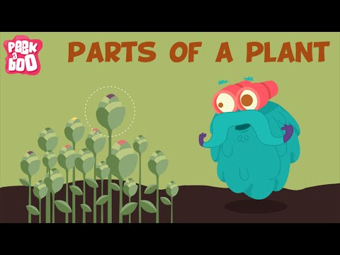 'Parts Of A Plant | The Dr. Binocs Show | Learn Series For Kids' on ViewPure
