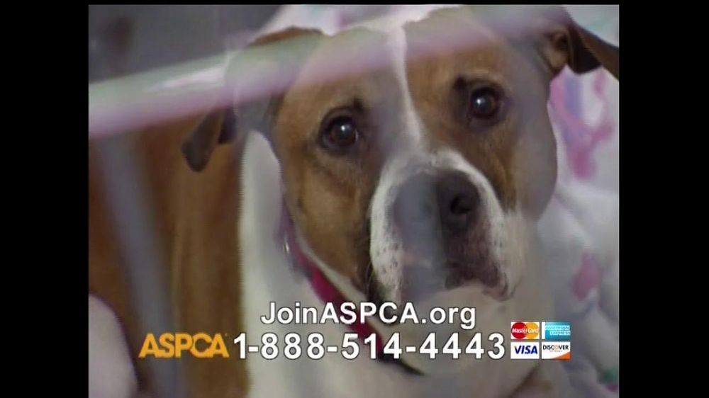 ASPCA TV Commercial For Neglect and Abused Animals