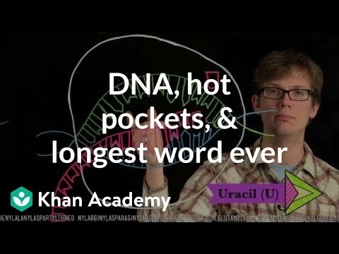 DNA, hot pockets, & the longest word ever