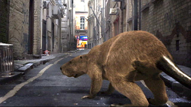 Prehistoric New York: Giant Beaver : Video : Discovery Channel