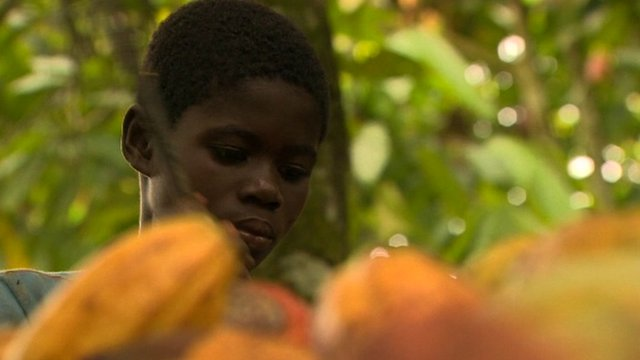 Cocoa farms in Ivory Coast still using child labour - BBC News