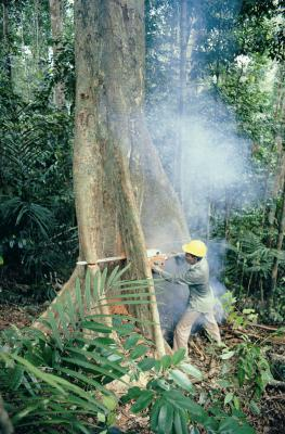 Things That Are Being Done to Help With Deforestation