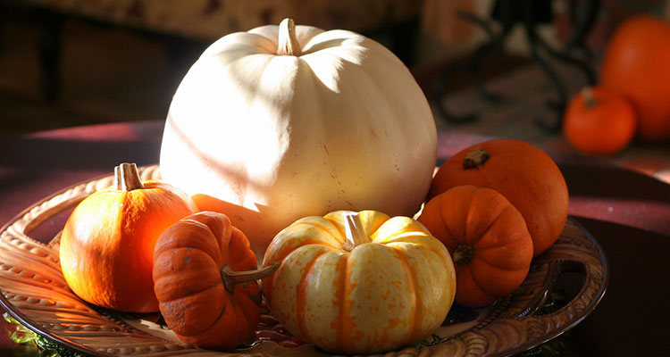 Great Pumpkin Recipes from Soup to Pizza to Pumpkin Pie - K12 - Learning Liftoff - Free Parenting, Education, and Homeschooling Resources