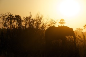 "9 Elephants in the (Class)Room That Should ""Unsettle"" Us - Will Richardson"