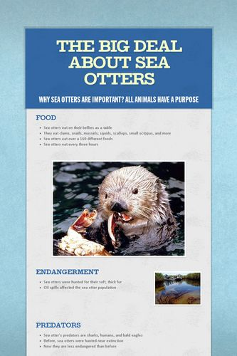 The Big Deal About Sea Otters