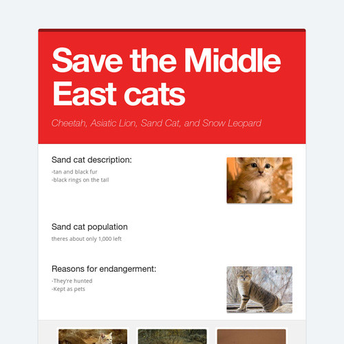 Save the Middle East cats