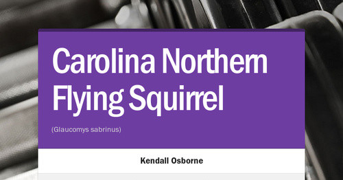 Carolina Northern Flying Squirrel