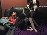 Little girl and the Great Dane who has helped her walk again | Daily Mail Online