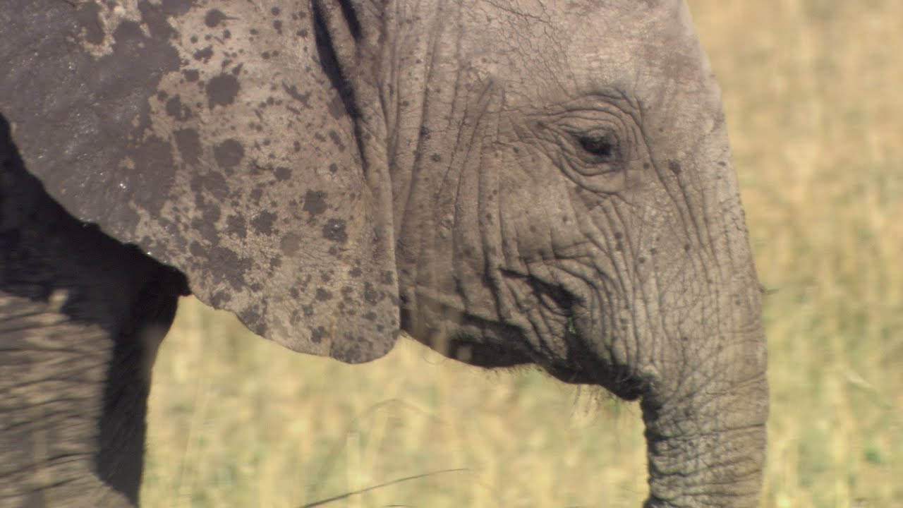 Help Save Elephants - NRDC Green Gifts