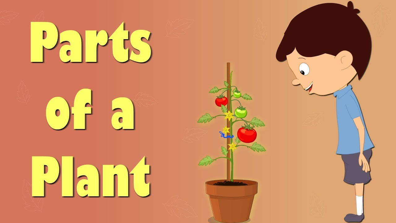 Parts of a Plant | Educational Videos