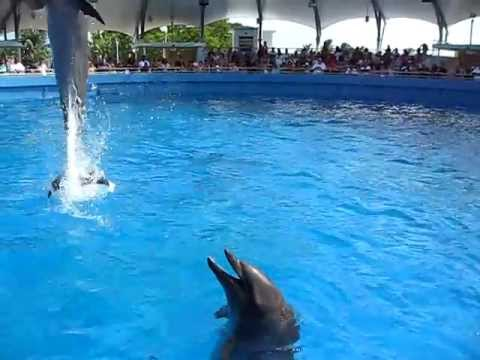 Cool Dolphin Doing Cool Tricks