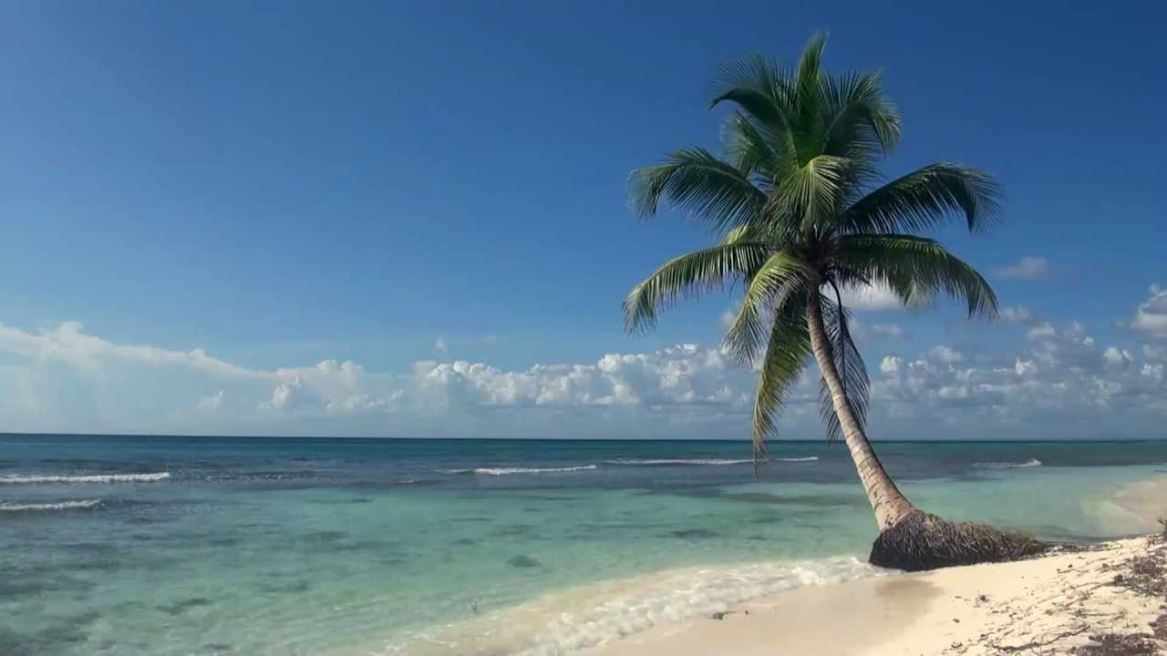 Relaxing 3 Hour Video of A Tropical Beach with Blue Sky White Sand and Palm Tree