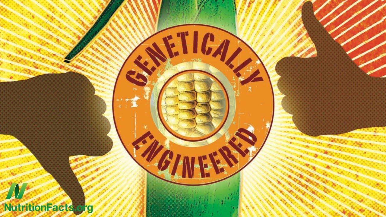 Are GMOs Safe? The Case of BT Corn