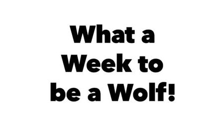 What a Week to be a Wolf!
