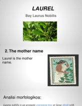 Latin - Laurel