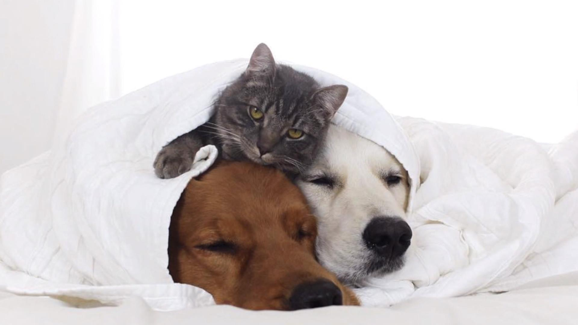 Watch these dogs and cat snuggle up for their nap