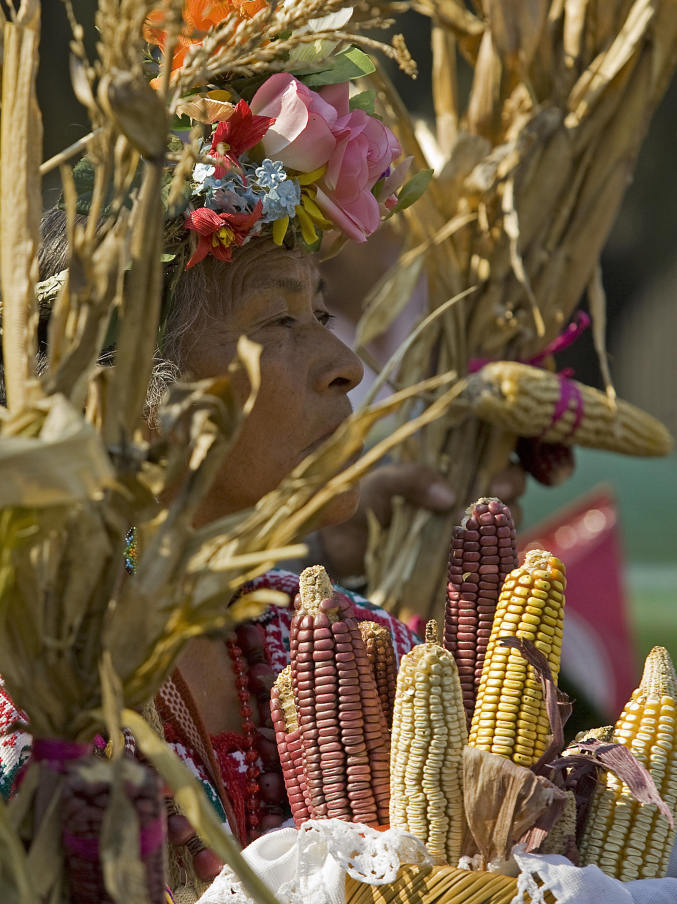 Today's King Corn Can Thank A Jumping Gene