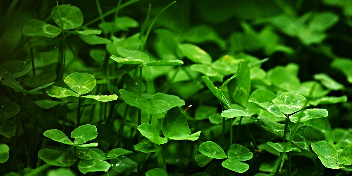Should Christians Celebrate St. Patrick's Day? | Articles | NewSpring Church