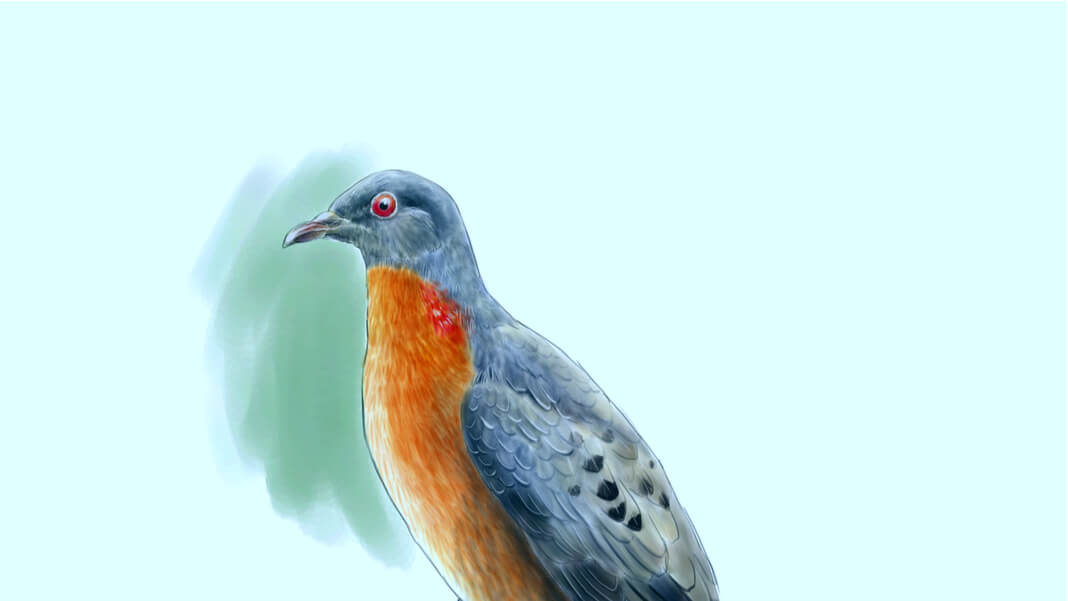 De-Extinction Is Now a Thing—Starting With Passenger Pigeons