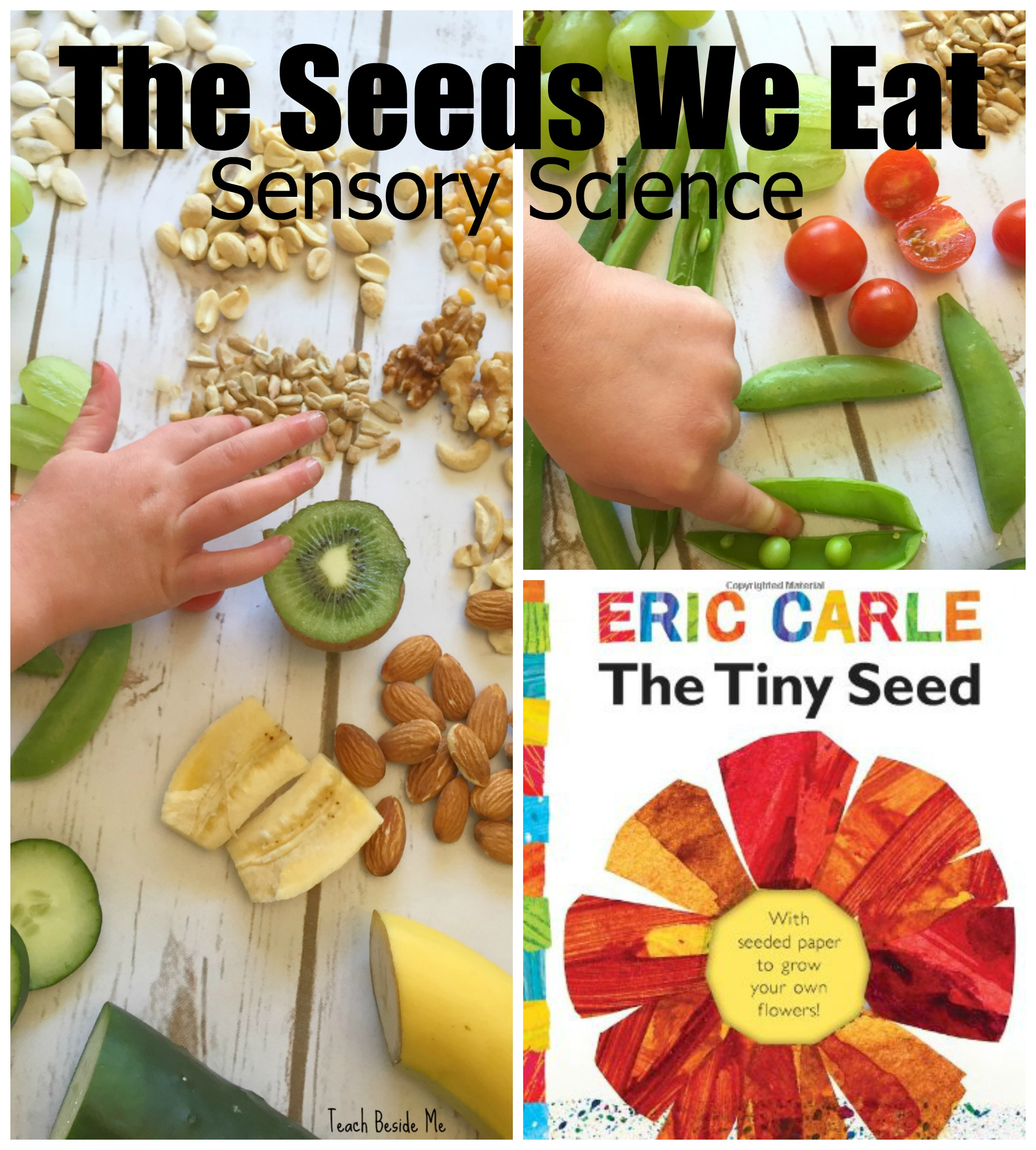the seeds we eat- nature sensory science for kids. Great with Eric Carle's Tiny Seed book