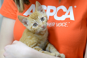 About Us | ASPCA