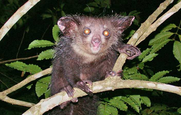 10 Strangest Animals in the Rainforest - Conservation Institute