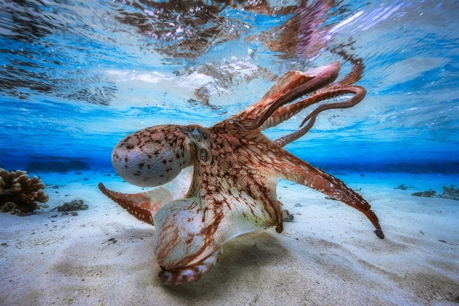Underwater Photographer of the Year, i vincitori