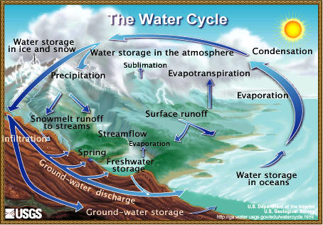 Rainforests help maintain the water cycle