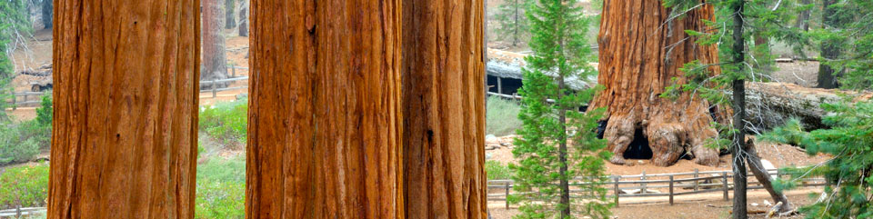 Sequoia & Kings Canyon National Parks (U.S. National Park Service)